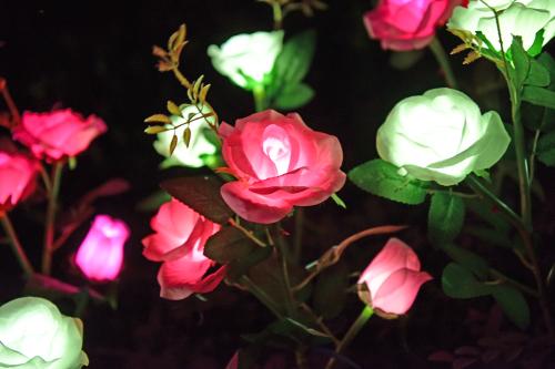 太阳能三头玫瑰(新款)