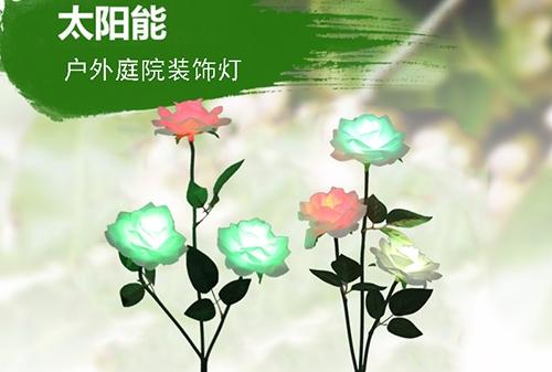 浙江太阳能三头玫瑰花