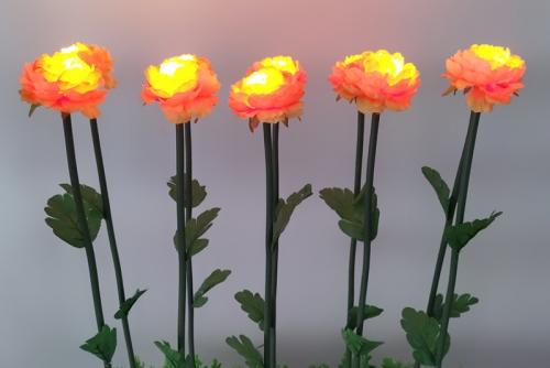广东牡丹花