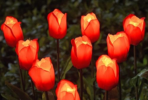 绢布玫瑰(红、黄)