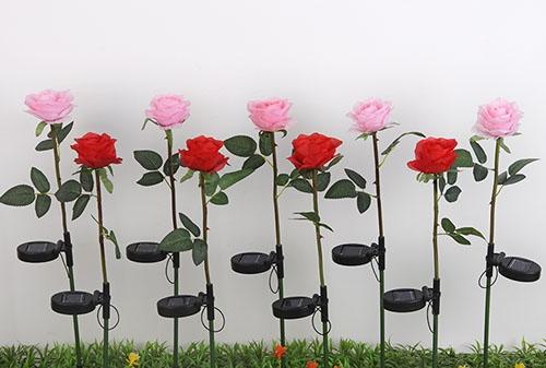 太阳能绢布玫瑰带刺