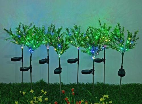 中山太阳能圣诞草